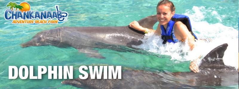 Chankanaab Dolphin Swim